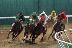 Horserac